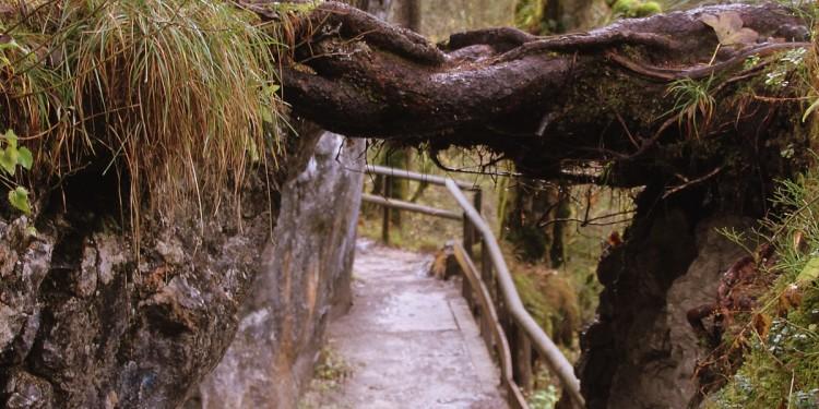 Zauberwald Hintersee Ramsau - 4