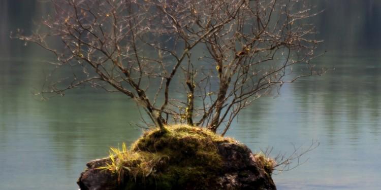 Zauberwald Hintersee Ramsau - 8