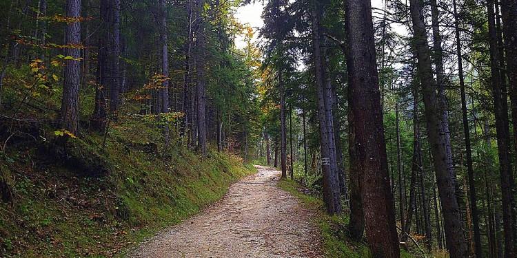 Kuehrointalm Watzmann Koenigsee Berchtesgadener Land - 2