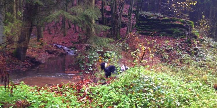 Trail Running Jogging Emmelshausen Hunsrueck - 10