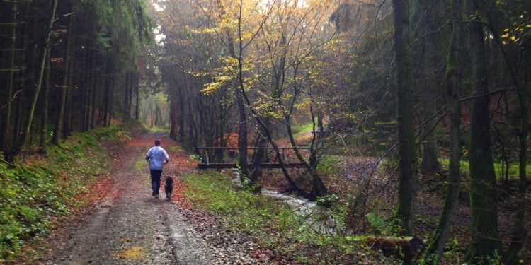 Trail Running Jogging Emmelshausen Hunsrueck - 11