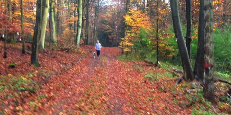 Trail Running Jogging Emmelshausen Hunsrueck - 8