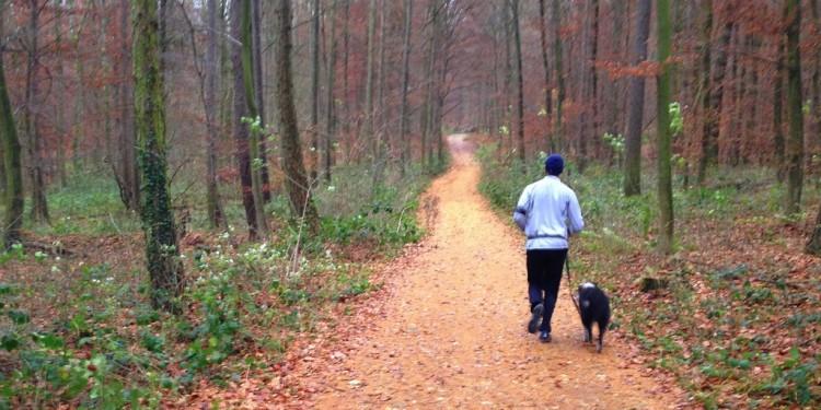 Trail running Stadtwald Koblenz Remstecken - 2