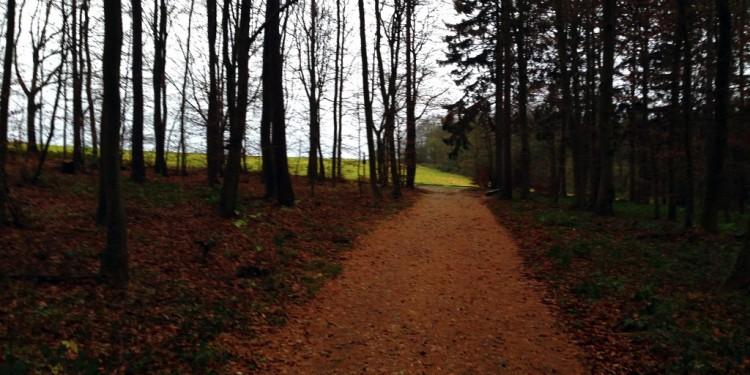 Trail running Stadtwald Koblenz Remstecken - 3