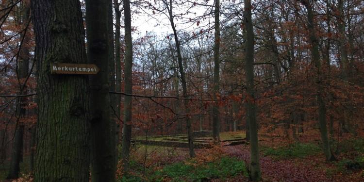 Trail running Stadtwald Koblenz Remstecken - 6