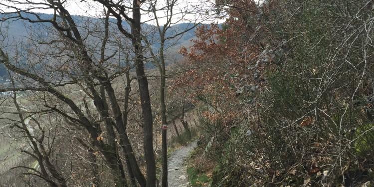Ahrtal Rotweinwanderweg Mosesquelle1