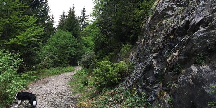 Bildstein Jaegersteig Schluchsee Schluchtensteig Schwarzwald - 14