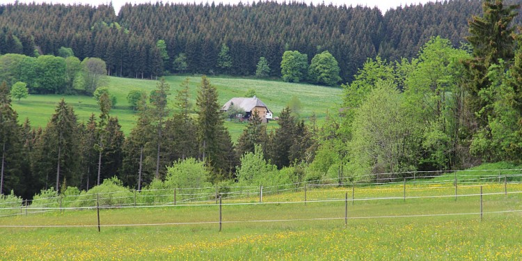 Bildstein Jaegersteig Schluchsee Schluchtensteig Schwarzwald - 66