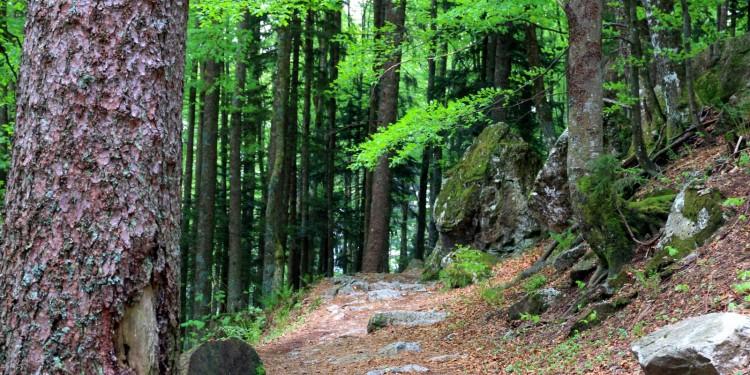 Feldberg Steig Schwarzwald