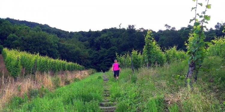 Moselsteig Etappe 9 Neumagen Osann-Monzel Kesten - 06