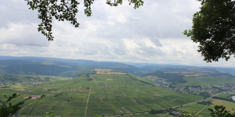 Moselsteig Etappe 9 Neumagen Osann-Monzel Kesten - 08