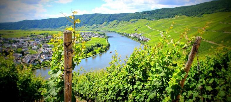 Moselsteig Etappe 9 Neumagen Osann-Monzel Kesten - 16