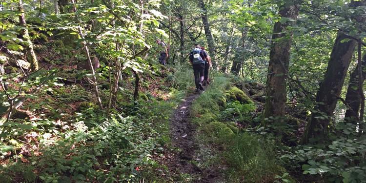 Wandermarathon Saar-Hunsrueck-Steig 2016 - 21