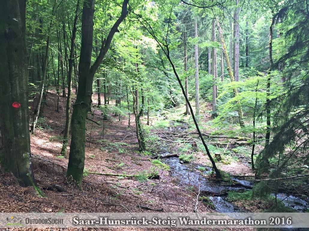 Wandermarathon Saar-Hunsrueck-Steig 2016 - 55