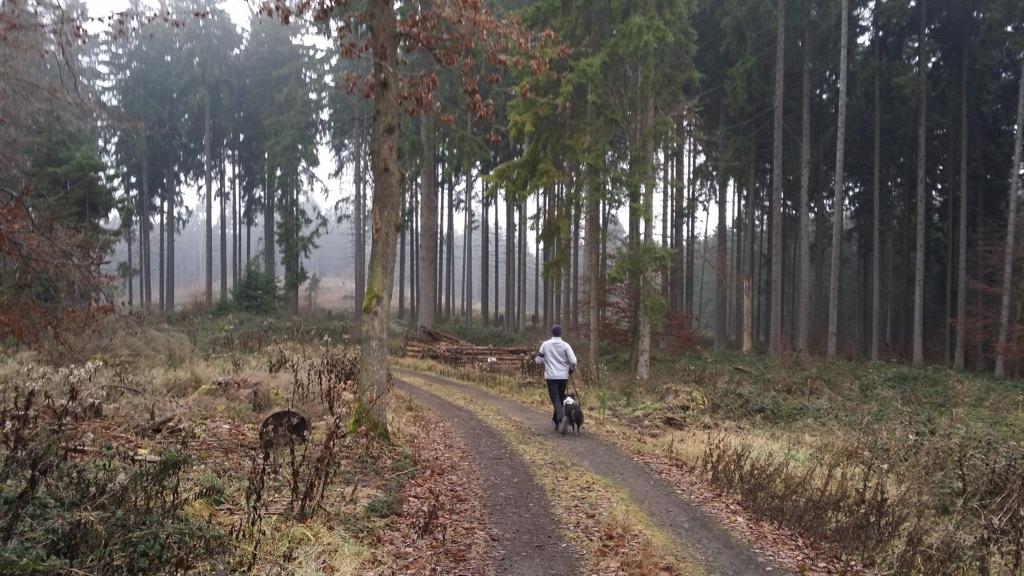 Trail Emmelshausen Jogging - 3