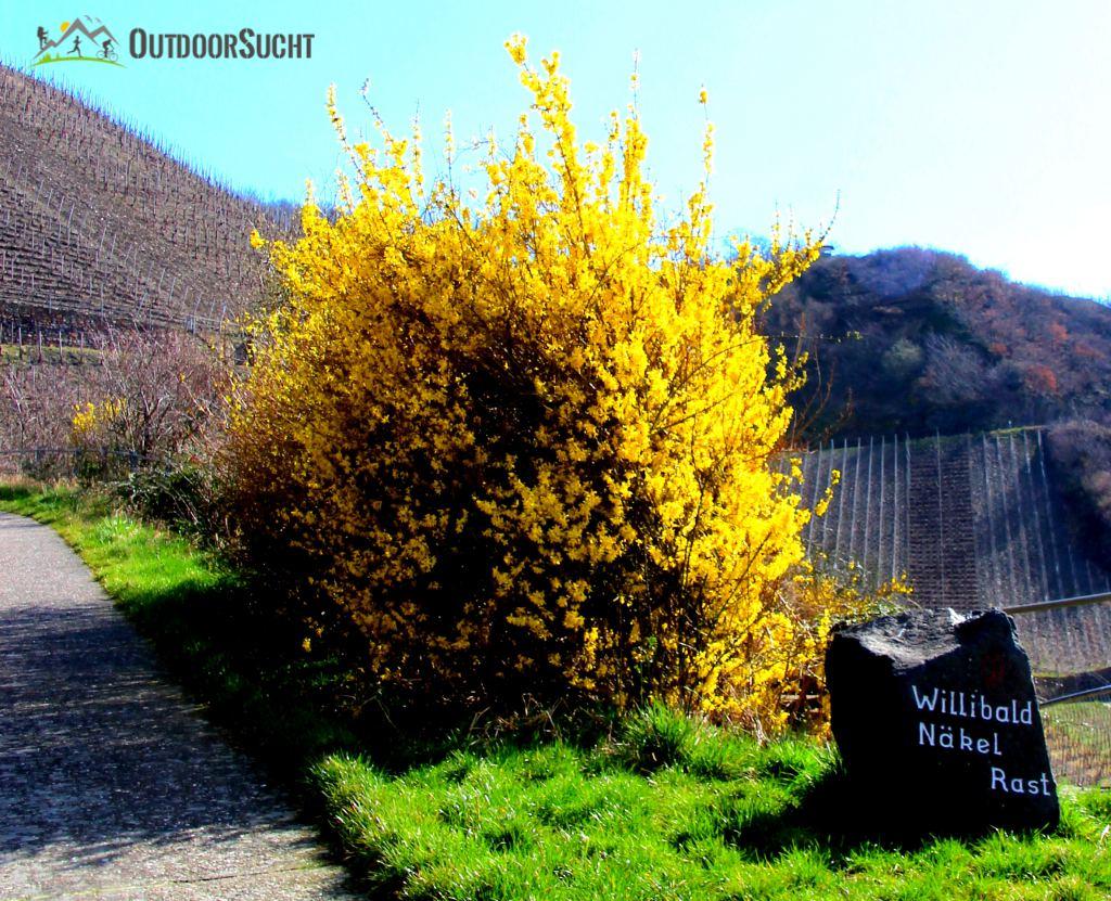 Rotweinwanderweg Ahrtal Dernau Rech - 06