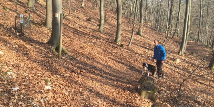 Siewe-Stuwe Weg Steig mit Hund