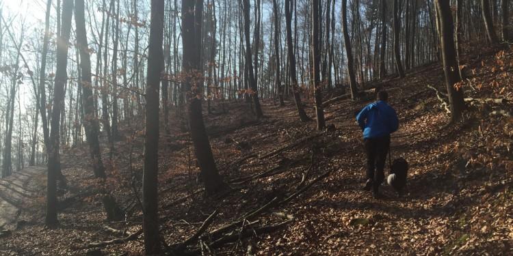 Trailrunning mit Hund