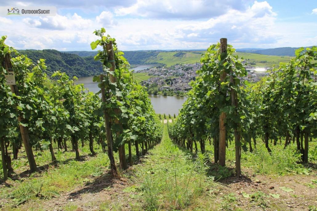 Moselsteig Etappe 9 Neumagen Osann-Monzel Kesten - 31